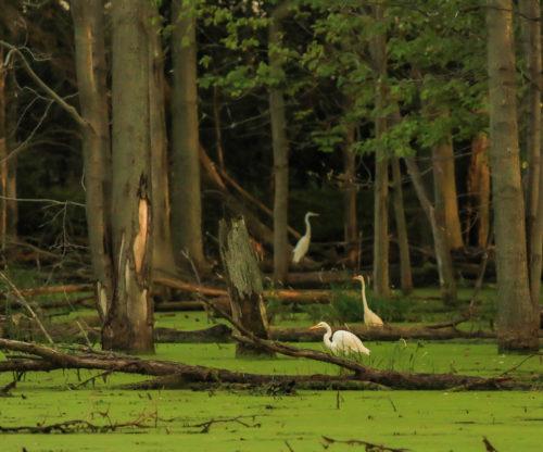Birds in a marsh