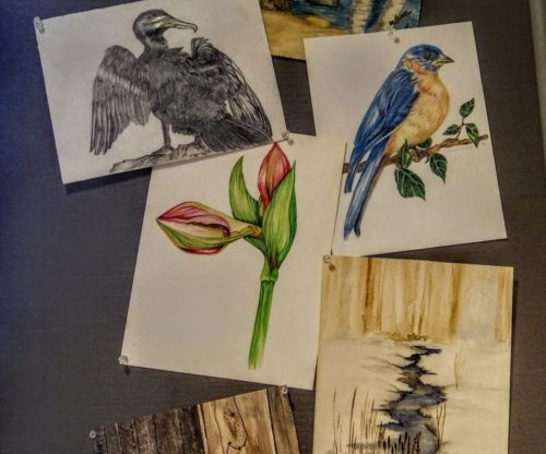 Art Gallery - Bird and Flower Drawings